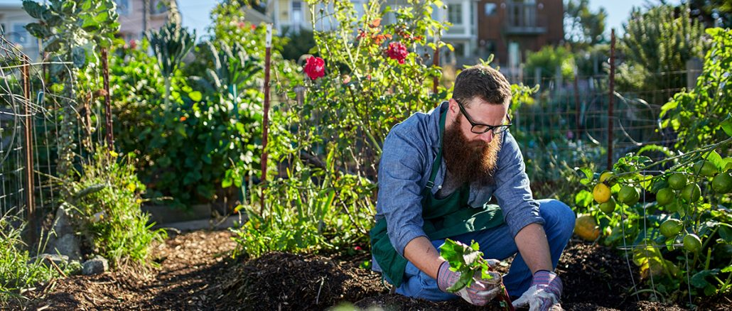 7 Reasons to Hire a Plant Expert or a Horticulturist For Your Nursery