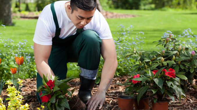 Effective Tips For Maintaining Your Garden Fencing