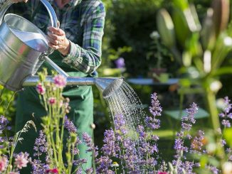 How Plant Breeding Services in The UK Impact Its Economy?